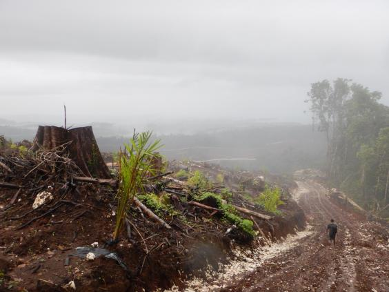 papua-logging-1.jpg